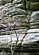 Sandstone cliff walls of Starved Rock State Park, Utica, IL