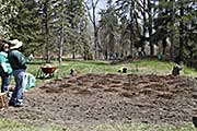 Mounds for companion garden of squash, corn, beans